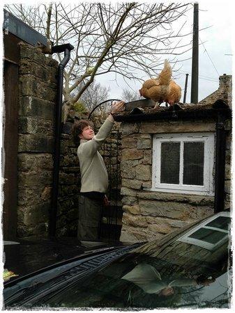Chare Close Bed & Breakfast: Poules sur le toit !