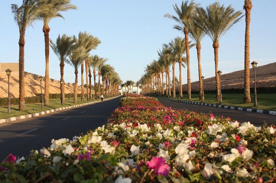 Hyatt Regency Sharm El Sheikh Resort : Main Entrance Driveway
