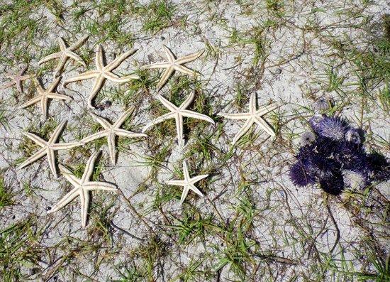 Passion Oceane Eco Cruises and Adventures: Estrellas de mar