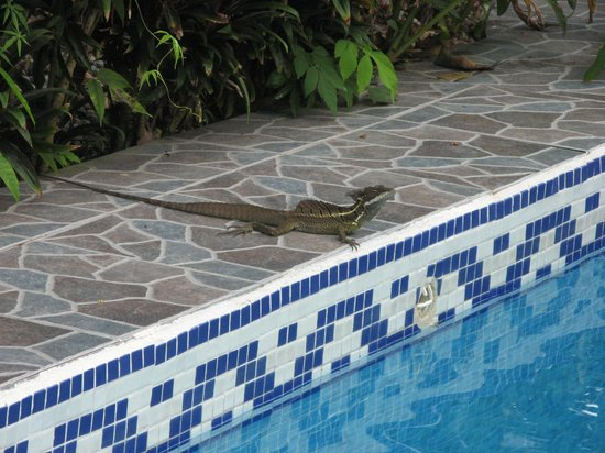 La Posada Private Jungle Bungalows: Wildlife by the pool
