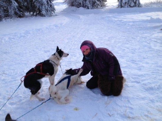 Paws for Adventure: The dogs LOVE to roll in the snow!
