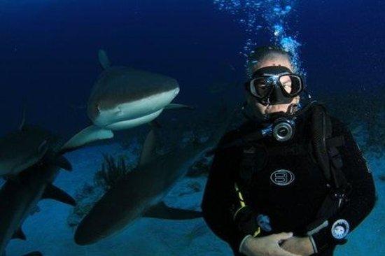 Den Laman Condominium: What Shark?