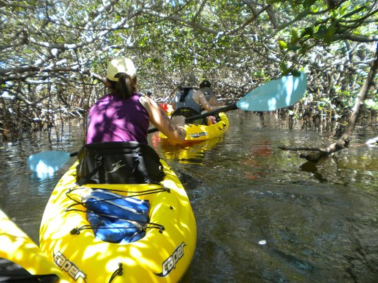 Shan-T Native Kayak Tours, Inc.: This was inside the mangrove tunnels