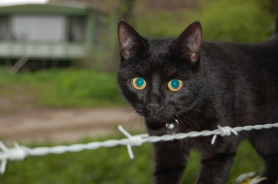 Riber Hall: the sweetest little black cat