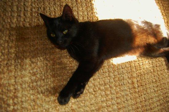 Riber Hall: black cat