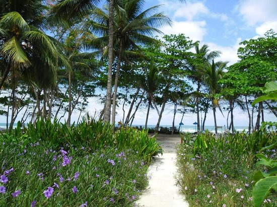 Pranamar Villas and Yoga Retreat : Walking down the path from the Ocean Front Villas. Good morning!