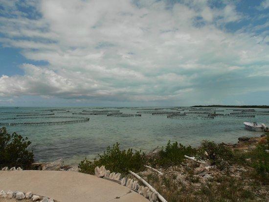 Caicos Conch Farm: ocean conch pens