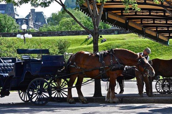 Le Manoir d'Auteuil: Horse and buggy across the street