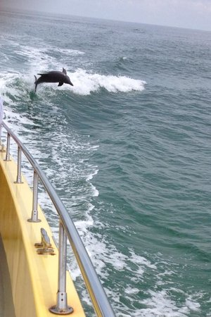 Dolphin Racer: Just one of many!