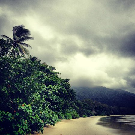 Daintree Wonder Tours Tripadvisor
