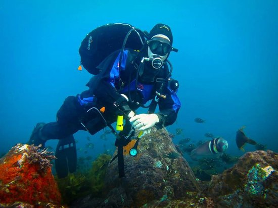 Northland Dive: Waiwiri Rock