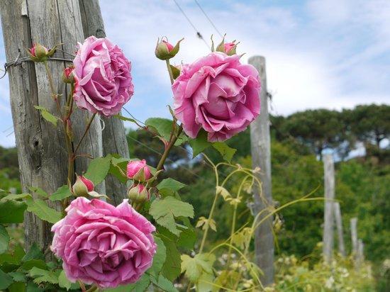 Residenza La Beccata: La collezione di rose