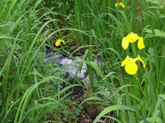 Ryukeien : 敷地内に四季折々の花が咲き鶯の鳴き声川蝉も見られる周辺の森です