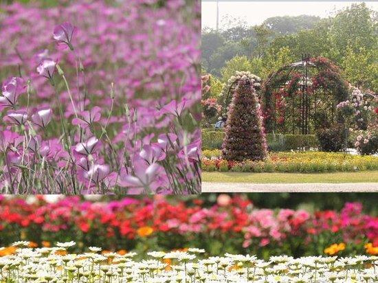 Shimizu Park: 花ファンタジア