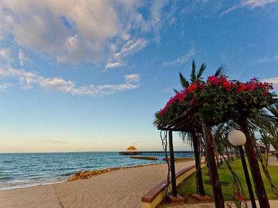 Hotel White Sands - The Beach Resort: Beach