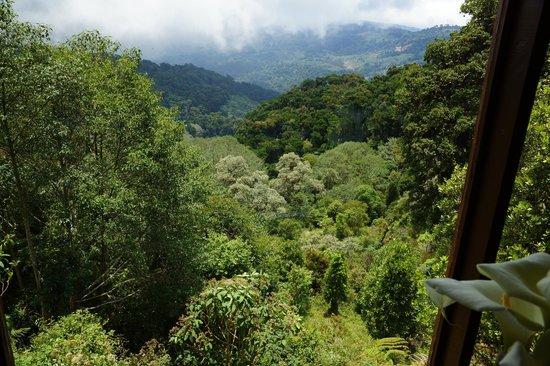 Paraiso Quetzal Lodge: Vallée