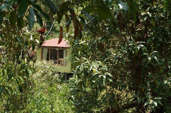 Paraiso Quetzal Lodge: Cabinas