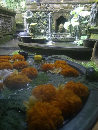 Tamarind Spa at Murni's Houses: Koi pond