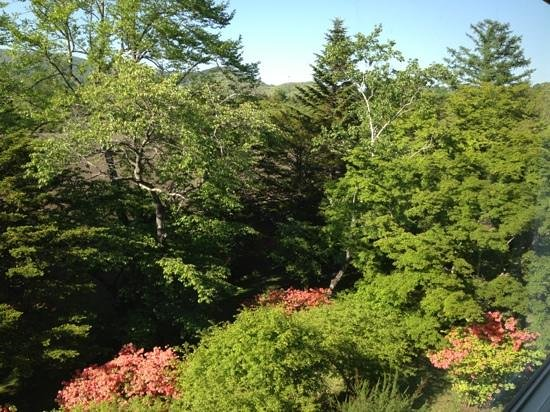 Karuizawa Prince Hotel West: Lovely view from my huge window