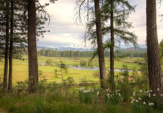 Spring at House on Metolius
