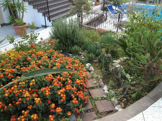 Villa Adriana Guesthouse Sorrento: Nice landscaping