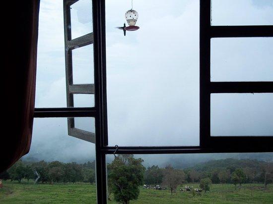 Poas Lodge and Restaurant: hummingbird window room 3