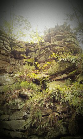 Beartown State Park: Rock face with moss