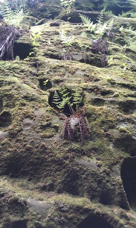 Beartown State Park: Interesting Layers with Moss and Ferns