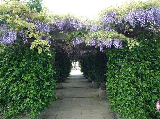 Matsue English Garden: Golden week