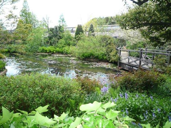 Matsue English Garden: like Monet's garden