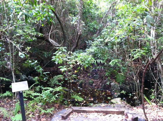Gumbo Limbo Trail: Solution Hole