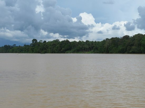 Kinabatangan Riverside Lodge: View of river