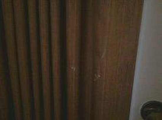 Hawthorn Suites by Wyndham Kent/Sea-Tac Airport: dirty curtains