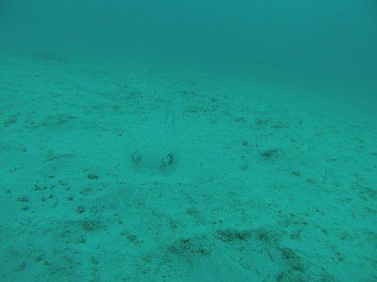 Cano Island: stingray