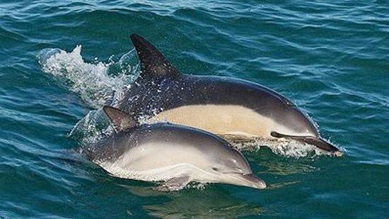 Neyland, UK: Dolphins