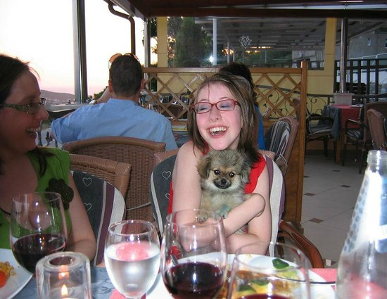 Restaurant Major: Dog in background wildlife