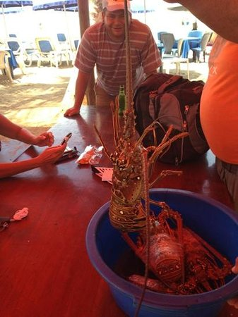 Guacuco, Venezuela: Fresh Lobsters in the Restaurant to be chosen