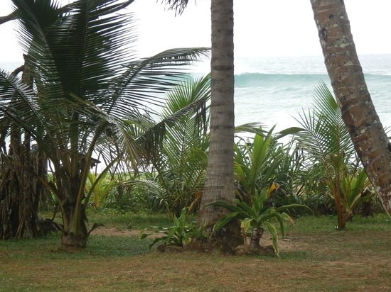 Koggala Beach Hotel : View from my patio