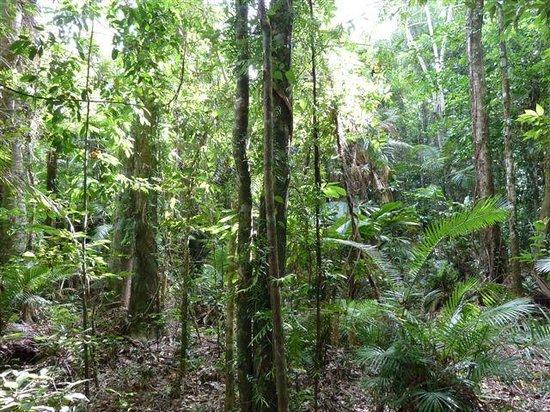 Daintree Crocodylus: View from my cabin