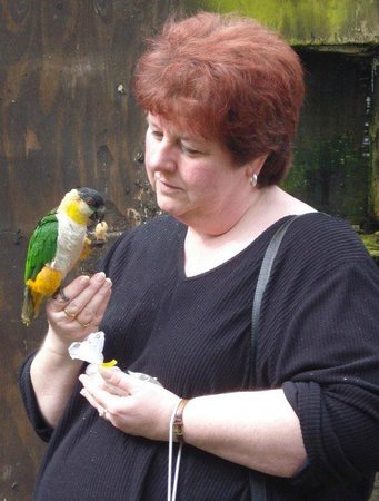 Tropical Birdland: Very friendly Caique who wanted to come home with me!