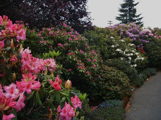 Azalea Park : Walks are lined with gorgeous flowers