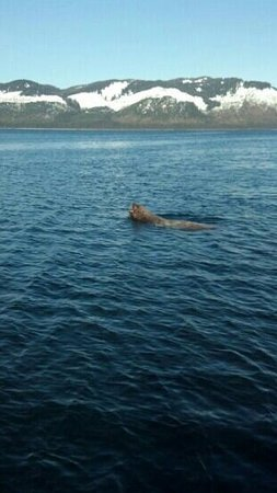Misty Bay Lodge: Seal lion!