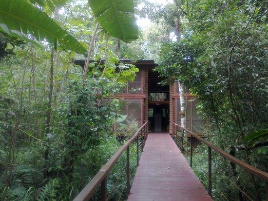 La Cantera Jungle Lodge: Pasillo hacia otras habitaciones