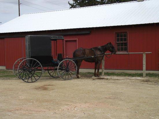 Lanesboro, MN: Horse & Buggy