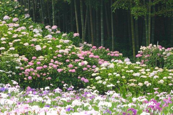 Hondo-ji Temple: 高低差をうまく利用して植栽