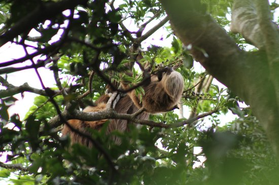 Rainbow Valley Lodge: Sloth and baby
