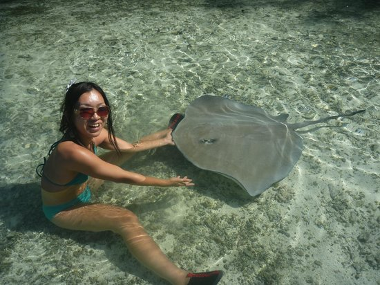 Papetoai, Polinesia Francesa: Sting Rays! Amazing beautiful creatures.
