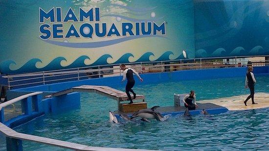 The Miami Seaquarium - Picture of Miami Seaquarium, Key Biscayne ...