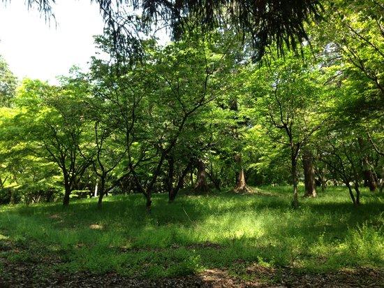 Kamo Shrine: 1000年以上の歴史。御猟の杜。