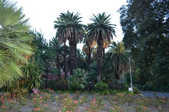Supreme Court Gardens: tall palms, west side